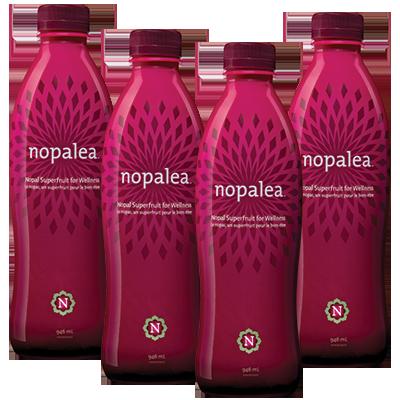 Nopalea 4-Pack